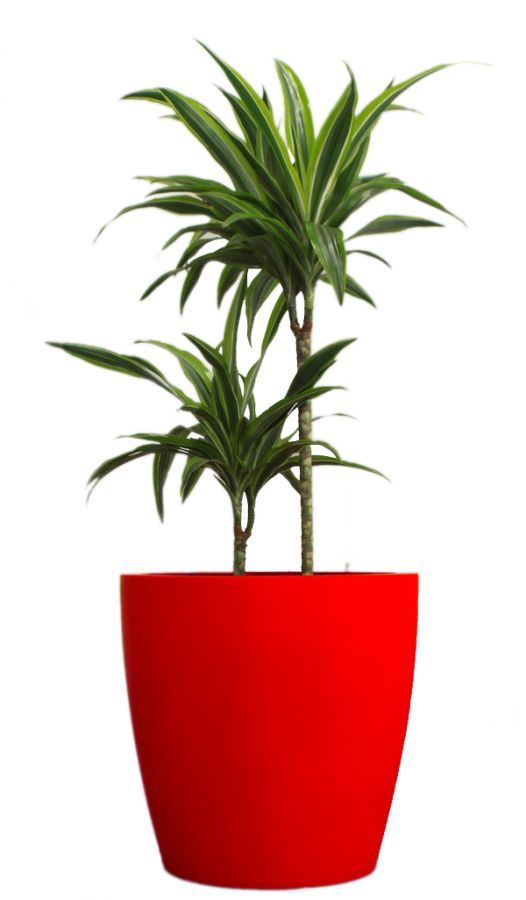 Eggpot Fibreglass Planters - (Medium) 45cm Tall