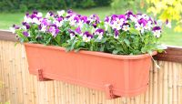 Surfinia Window Box Planter with Reservoir in Terracotta W60cm x H18cm