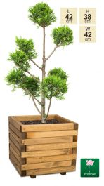42cm Small Wooden Pine Raised Cube Planter