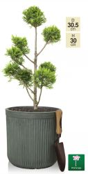 H30cm Moss Green Washed Striped Fibrecotta Pot