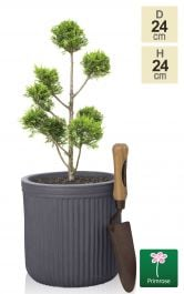 H23.5cm Grey Washed Striped Fibrecotta Pot