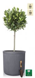 H50cm Grey Washed Striped Fibrecotta Planter