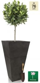 H76cm Small Anthracite Two-In-One Flared Planter