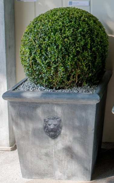 H60cm Lion Head Large Galvanised Zinc Planter