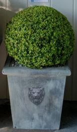 H50cm Lion Head Medium Galvanised Zinc Planter