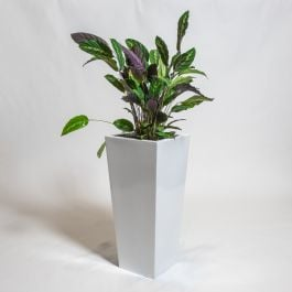 75cm White Gloss Polystone Tall Flared Planter