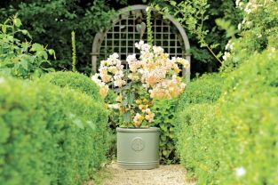 25cm Ceramic Edwardian Heritage Cylinder Planter in Green