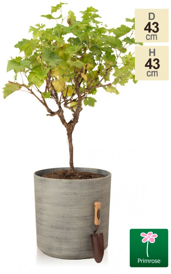 H43cm Cortina Stone Cylinder Planter - By Primrose™