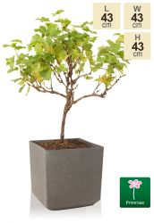 H43cm Baltic Grey Square Planter - By Primrose™
