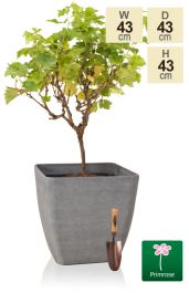 H43cm Volcanic Grey Square Planter - By Primrose™