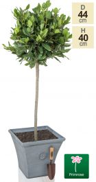 H40cm Continental Grey Square Tuscan Planter - By Primrose™