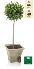 H40cm River Mist Square Tuscan Planter - By Primrose™