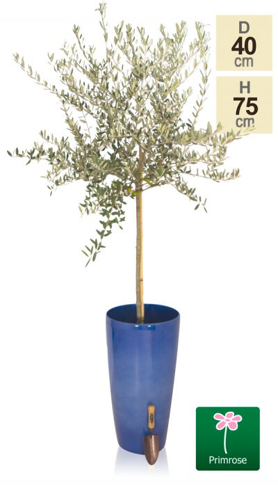 H75cm Pacific Blue Cylinder Planter - By Primrose™
