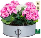 45cm Walton Vintage Zinc Low Planter by Primrose™