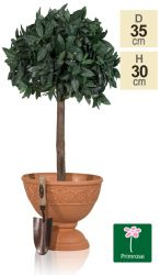 35cm Set of 2 Roman Urn Planters in Terracotta by Primrose™