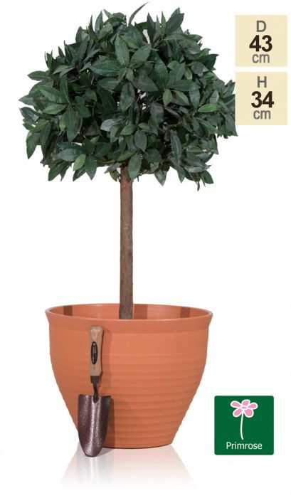 43cm Pack of 2 Traditional Flower Pots in Terracotta by Primrose™