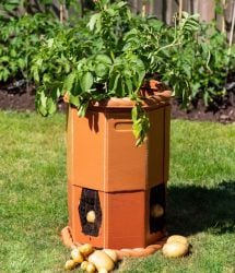 Victorian Potato Barrel - H60cm x D43cm