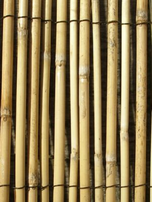 4.0m x 2.0m Peeled Reed Natural Fencing and Screening by Papillon™