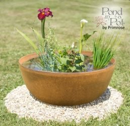 Semi Shade Pond In A Pot Kit with 55cm Aged Rust Effect Planter