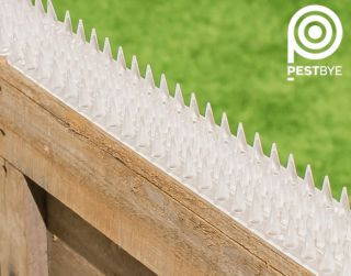 Fence and Wall Spikes - Clear - Cat Repellent Security Spikes by PestBye®