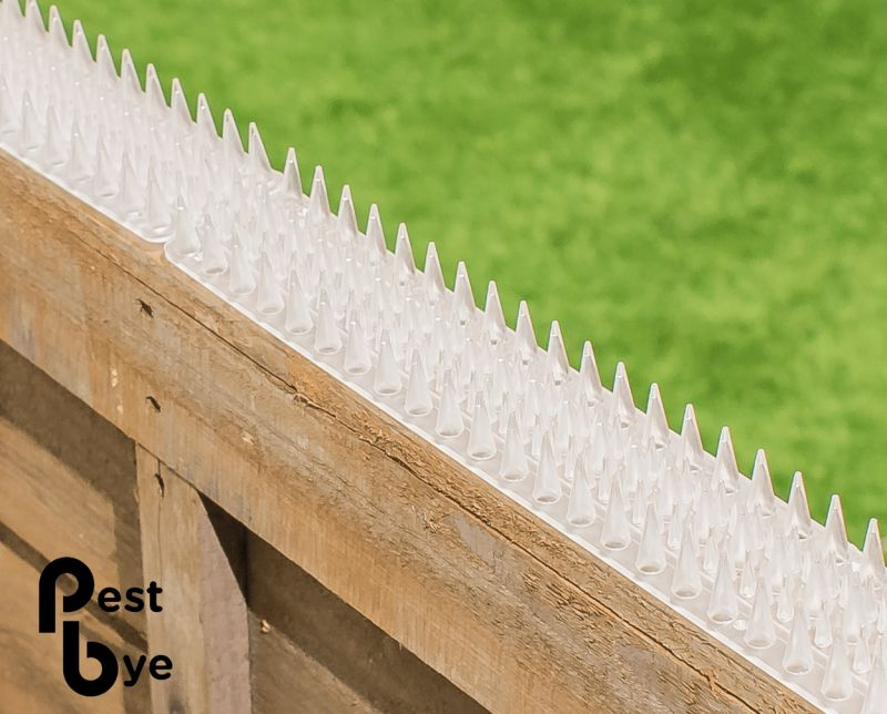 Fence And Wall Spikes Clear Cat Repellent Security