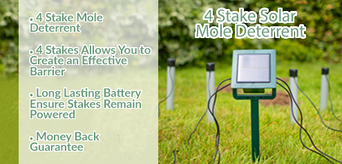 ultrasonic mole repellents