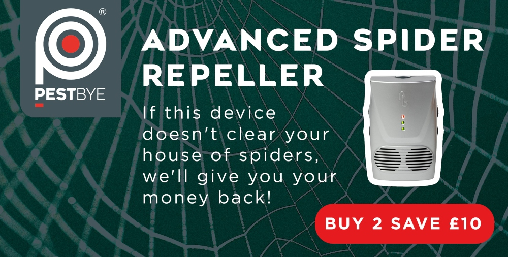 spider deterrents