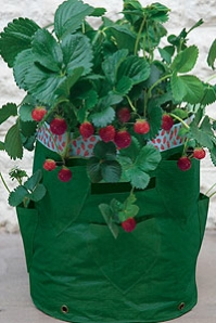 Lightweight Strawberry Planter Single or Double Pack