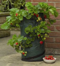 Pop-Up Strawberry Patio Planter - H58cm x D31cm