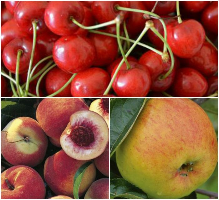 Summer Fruit Pie Collection - 3 x 5ft Trees 'Duke of York' Peach, 'Morello' Cherry and 'Blenheim Orange' Dessert Apple