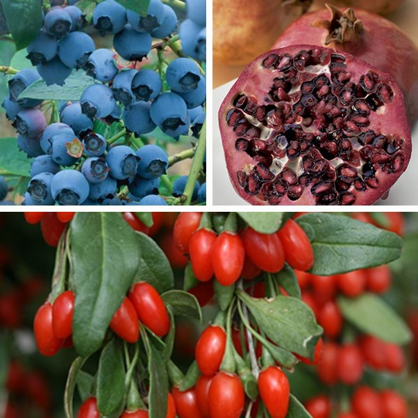 Superfood Mixed Fruit Collection - Pomegranate, Goji and Blueberry 'Goldtraube'