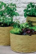 Fruit & Vegetable Planters