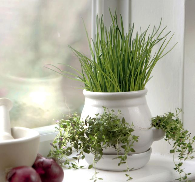 Ceramic Kitchen Herb Pot - White