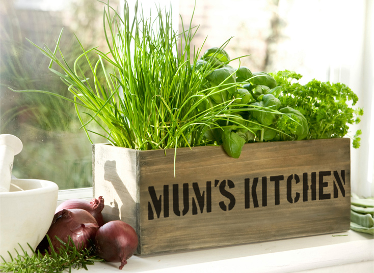 'Mum's Kitchen' Herb Garden Windowsill Planter - with Herbs and Compost