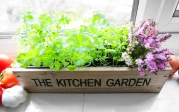 Kitchen Herb Garden Windowsill Planter with Seeds and Compost
