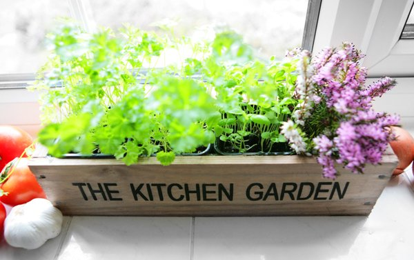 Kitchen herb garden windowsill planter with seeds and Kitchen windowsill herb pots