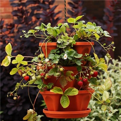 Strawberry and Herb Planter
