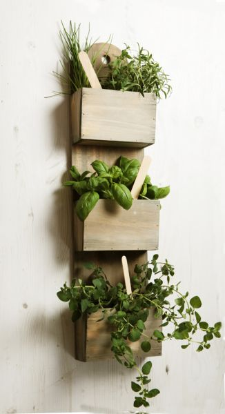 Shabby Chic Wall Mounted Herb Planter Kit with Seeds
