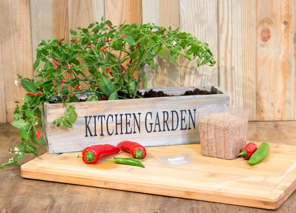 Grow Your Own Chilli Garden - Kitchen Windowsill Planter with Seeds and Compost