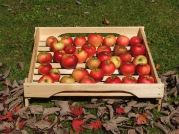 Stacking Apple Tray H15cm x W54cm x D57cm