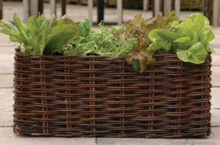 Burgon and Ball Natural Willow Salad Planter