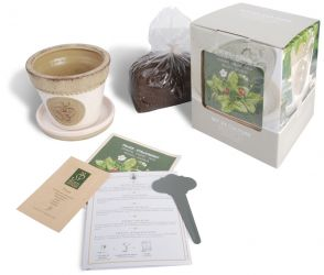Strawberry Growing Set