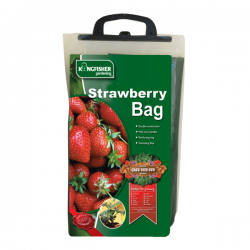 1 Pack Strawberry Planter