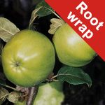 Grenadier' Cooking Apple Tree - Root Wrapped