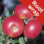 Discovery' Dessert Apple Tree - Bare Root