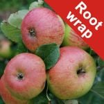 Fiesta' Dessert Apple Tree - Bare Root