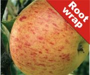 Rubinette' Dessert Apple Tree - Bare Root