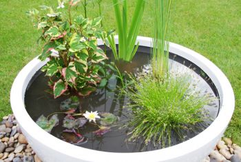 Sun Loving Pond in a Pot Kit with 72cm White Fibreglass Planter