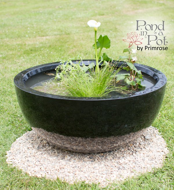 All Year Colour Pond in a Pot Kit with Black Fibreglass 72cm Planter