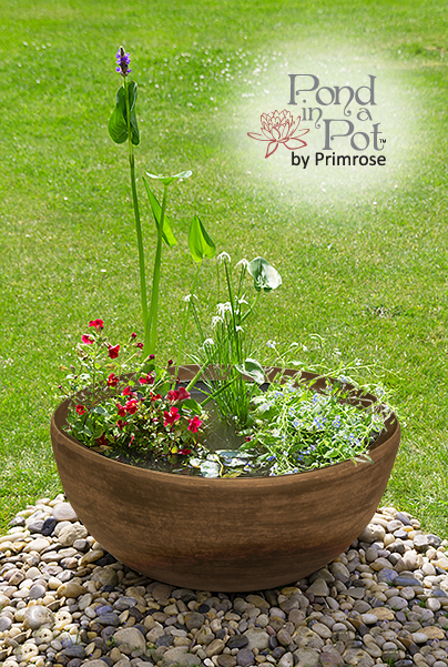 Sun Loving Pond in a Pot Kit with 55.5cm Brown Stone Resin Planter